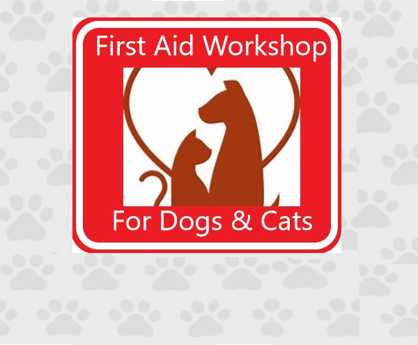 First Aid Workshop Icon