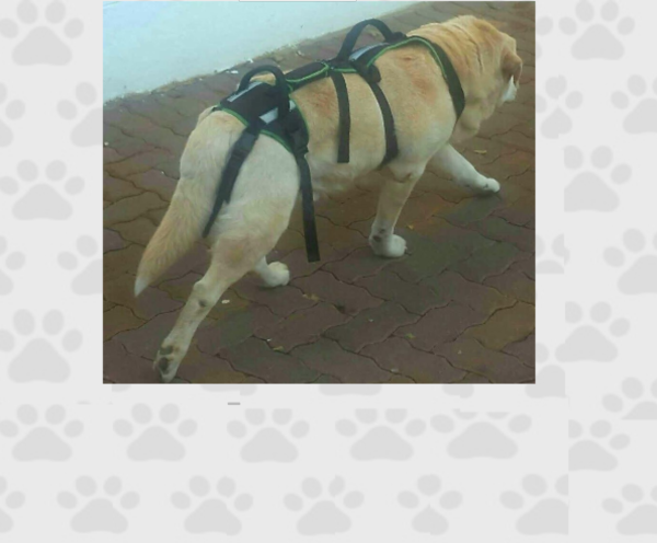 Adjustable Full Body Harness